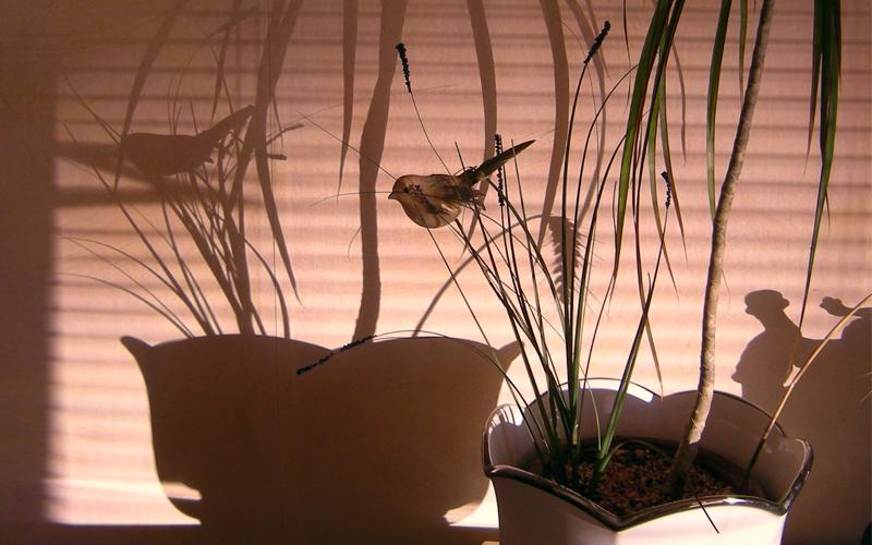 Schatten und Schattierung