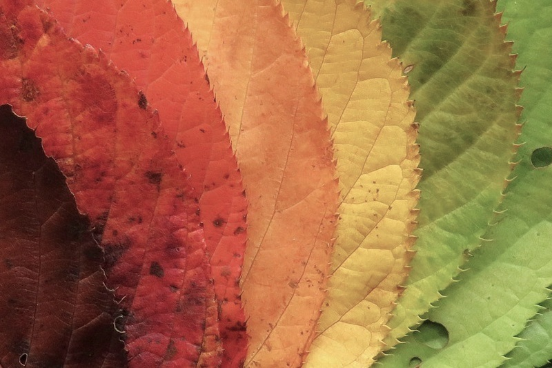 Edutainment im Herbst